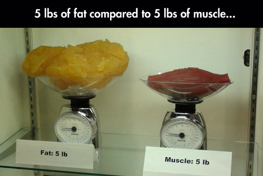 Comparison Fat vs Muscle in Pounds by Coach Chris McClarence